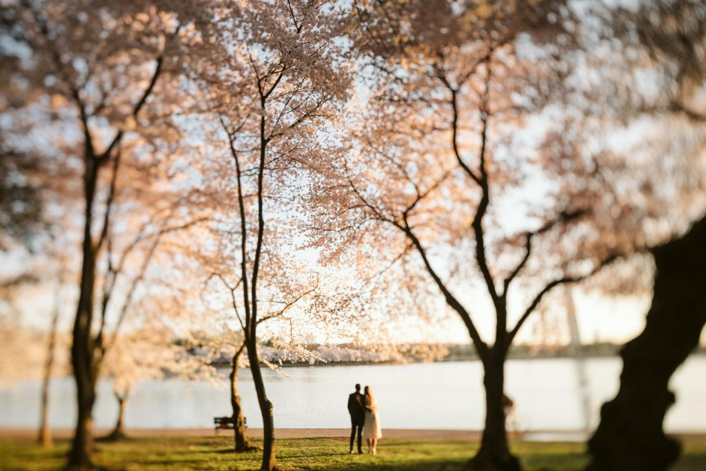couple holding hands with cherry blossom trees surrounding them
